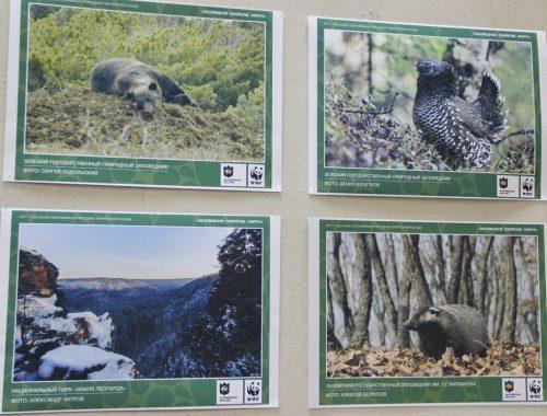 Две фотовыставки, посвященные российским заповедникам, открылись в Биробиджане