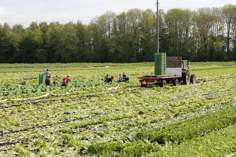 Фермер из ЕАО утаил миллионы от государства