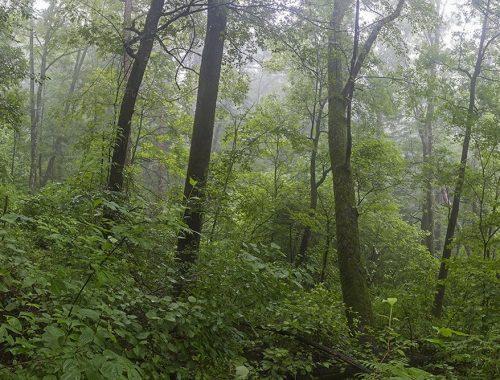 ЕАО попала в число «двоечников» по эффективности управлениями лесами