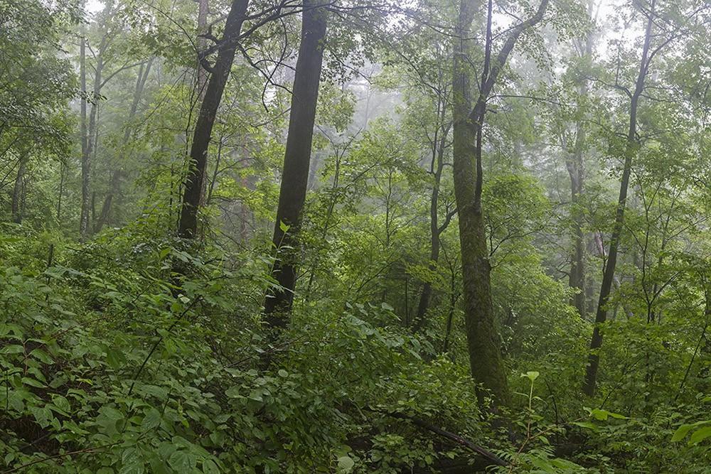 Заблудившийся в лесу мужчина найден живым и здоровым