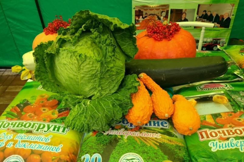 Фермеры из Еврейской автономии приняли участие в «Празднике урожая»