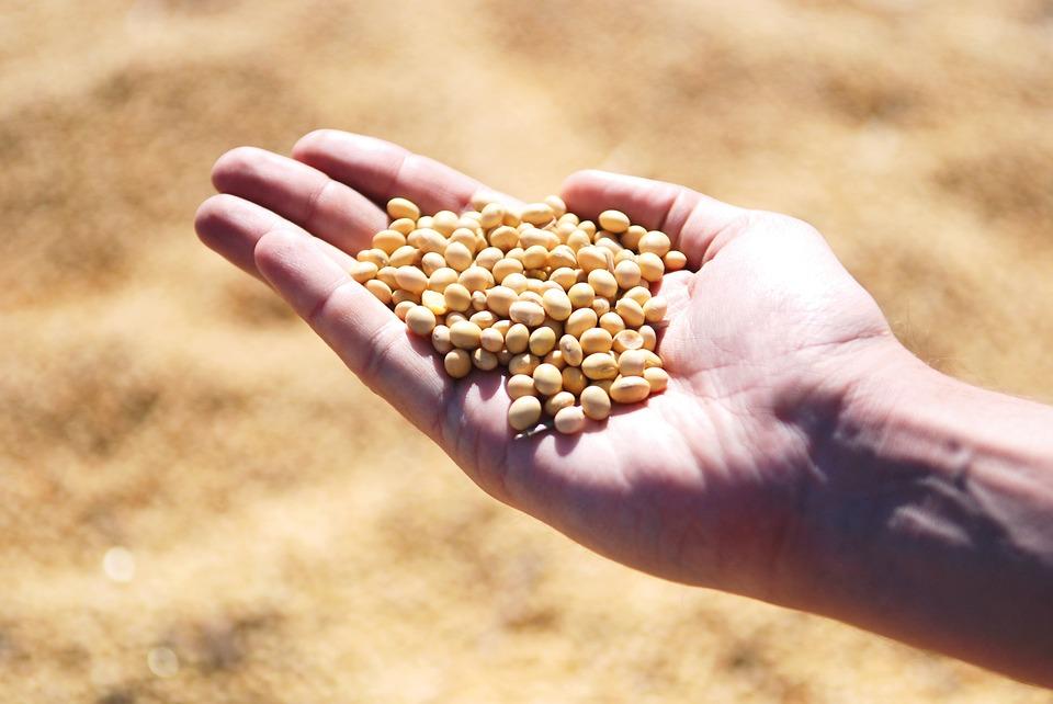 670 тонн зараженной сои пытались вывезти из ЕАО в Китай