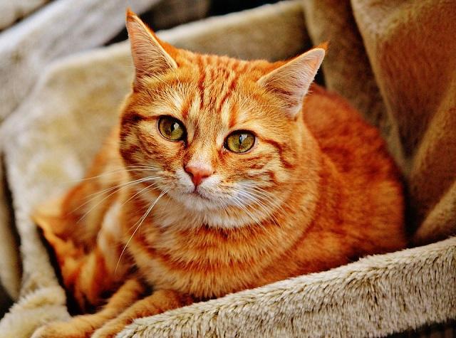 Платная регистрация домашних животных может появиться в России