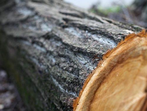 Уголовное дело «выросло» на 4,5 га незаконно вырубленного леса