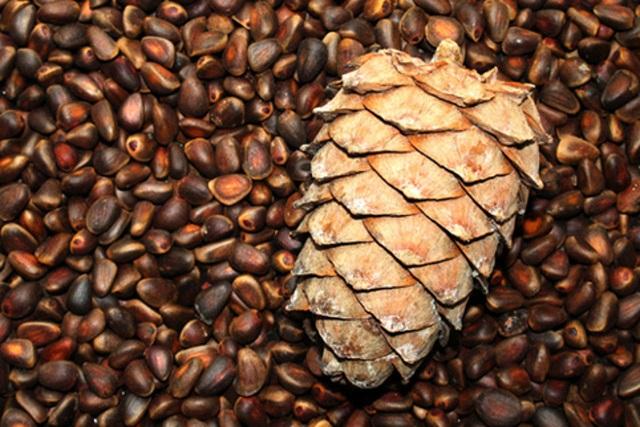 Членам банды похитителей кедровых орехов вынесли приговор