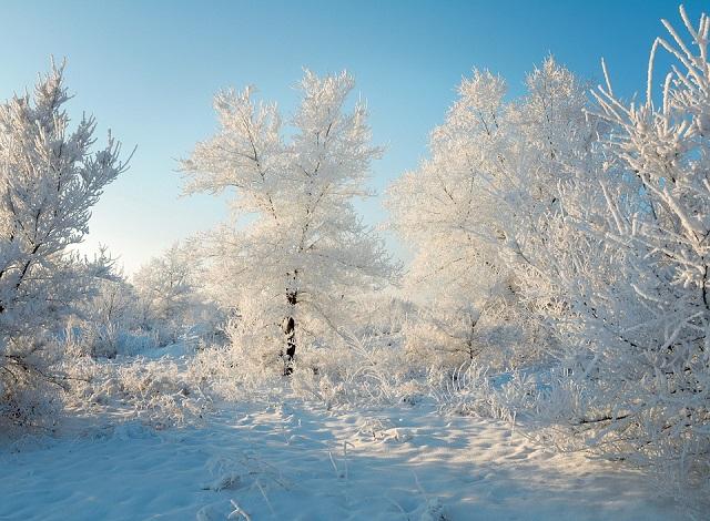 Скупым на осадки и морозным будет последний месяц зимы в ЕАО