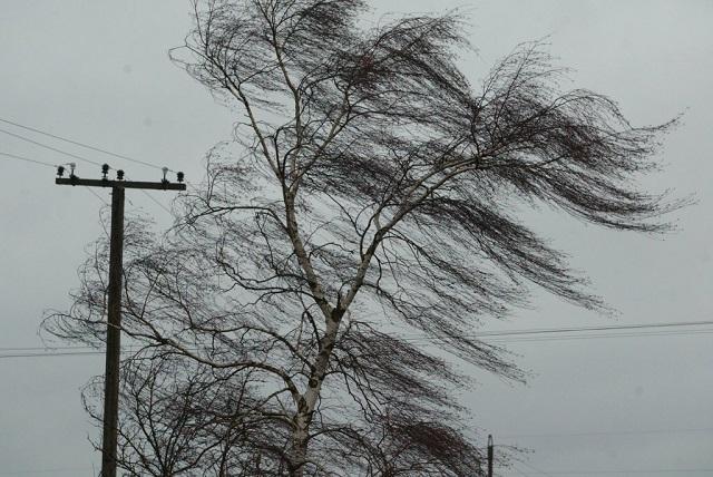 И снова непогода: завтра ожидается сильный ветер