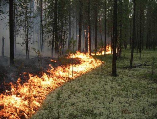 Особый противопожарный режим введен в ЕАО