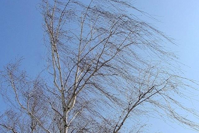 Завтра в ЕАО ожидается усиление ветра