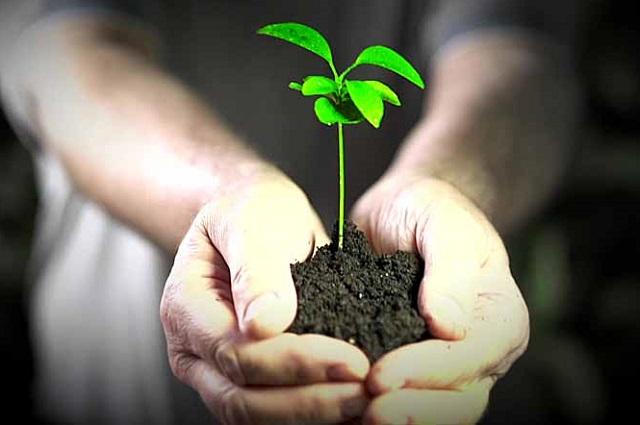 В ЕАО может появиться закон об экологическом образовании