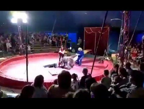 Медведь напал на дрессировщика во время представления