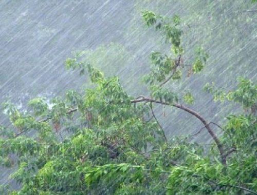В ЕАО прогнозируются сильные ливни