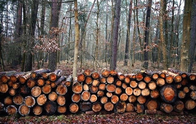 Депутаты ЕАО намерены пресечь незаконную рубку леса