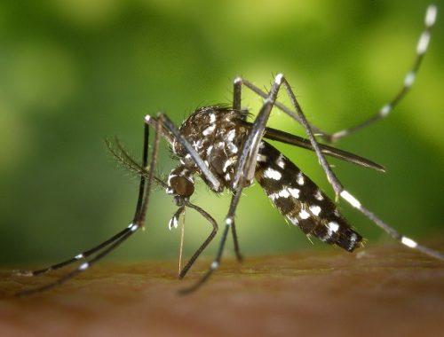 У россиянки после укуса комара под кожей поселился червь