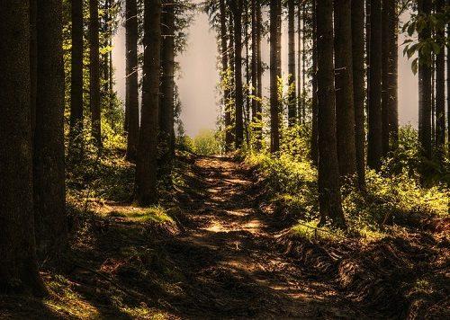 Ушел в лес и не вернулся: как и почему пропадают люди