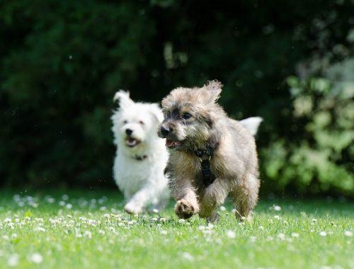 На Дальнем Востоке может появиться собачий «Дом-2»