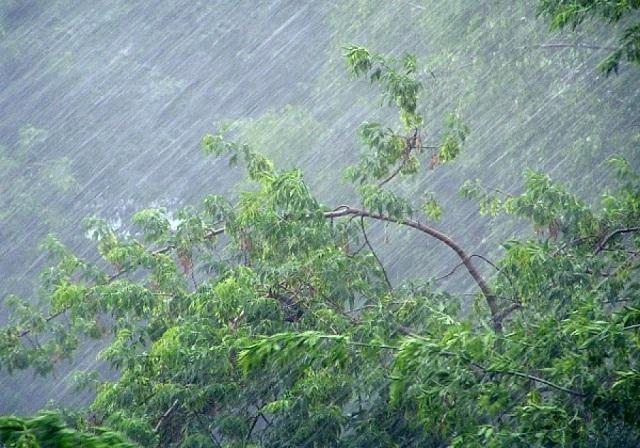 Спасатели ЕАО предупреждают о надвигающемся шторме