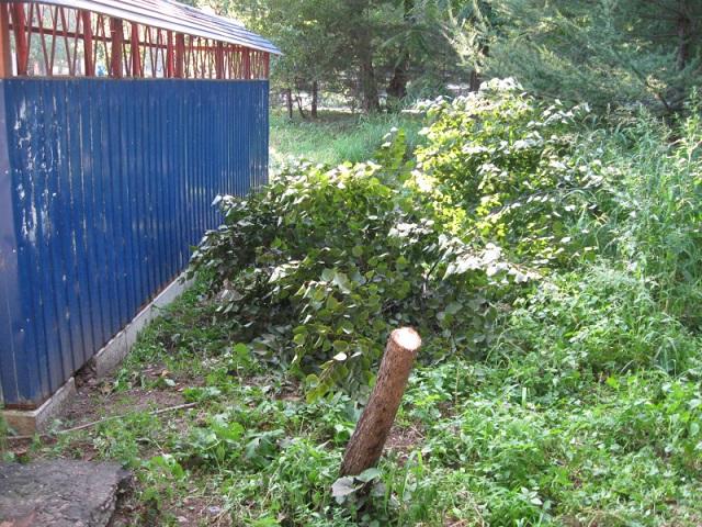 В Биробиджане злоумышленники спилили дерево, к которому был пристегнут велосипед