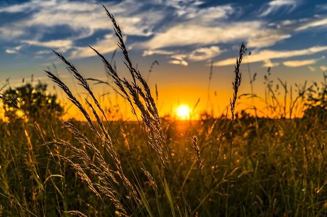 Какую погоду ждать в августе — прогноз от сотрудников МЧС