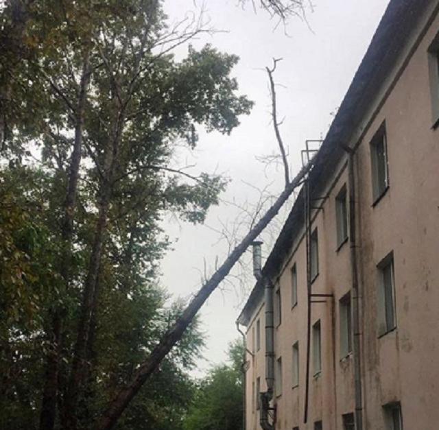 Дерево упало на здание вуза в центре Биробиджана
