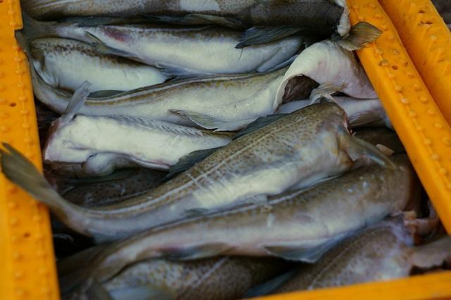На Дальнем Востоке зафиксирован рекордный вылов рыбы