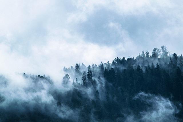 Спасатели прекратили поиски пропавшего в лесу мужчины