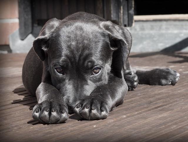 Когда придет конец массовой травле бездомных животных в Биробиджане?