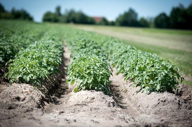 Два начинающих фермера выиграли гранты по 1,5 млн рублей