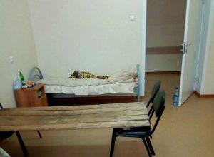 Больницу с койками из досок проверит прокуратура
