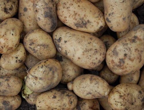 СК возбудил дело из-за гнилой картошки для Росгвардии