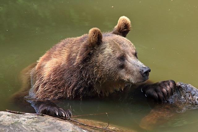 Медвежью услугу оказала соседке жительница ЕАО
