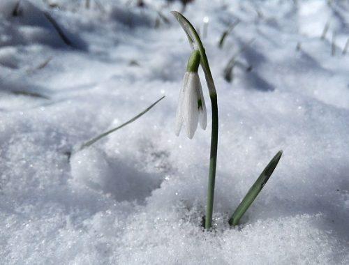 Снежным будет март в ЕАО
