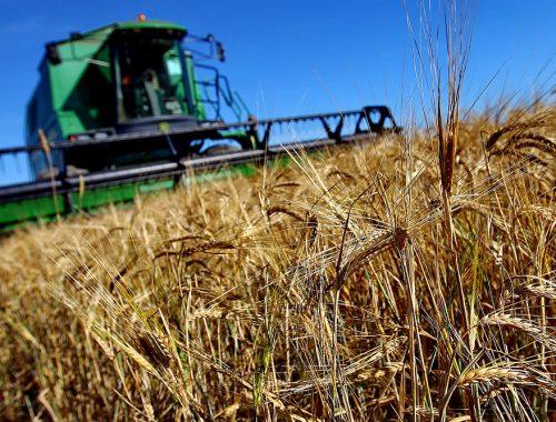 У сельского хозяйства ЕАО появились новые направления развития