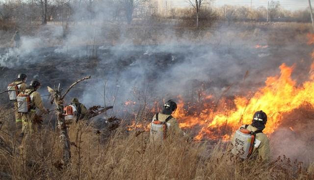 В ЕАО полыхают лесные пожары: за сутки выгорело 73,5 га леса