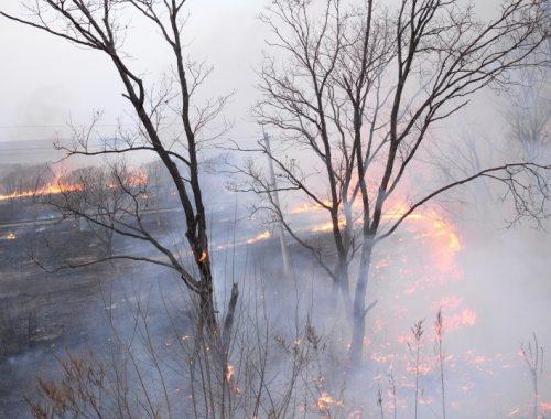 За первые сутки лесные пожары в ЕАО «прошли» 3,4% своей прошлогодней территории