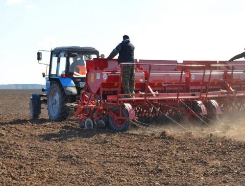В автономии начался сев ранних зерновых культур