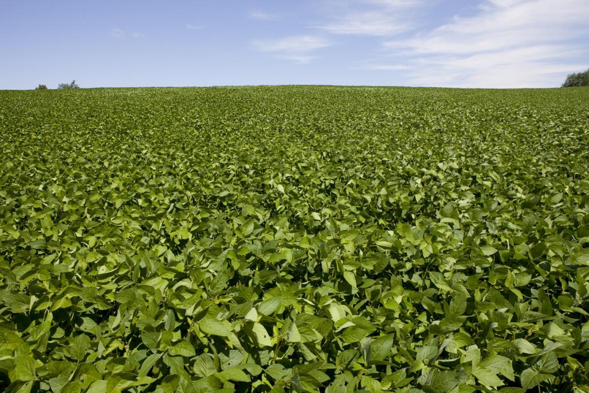 Китайская компания может вложить $120 млн в строительство соевого завода в ЕАО