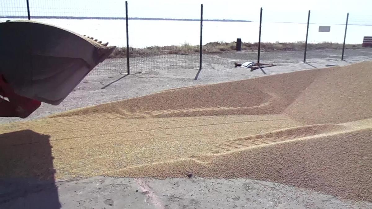 Более тонны незаявленной сои пытались вывезти из ЕАО в Китай