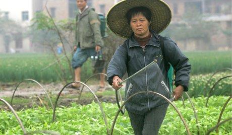 ОПРОС: Грозит ли ЕАО экспансия со стороны Китая?