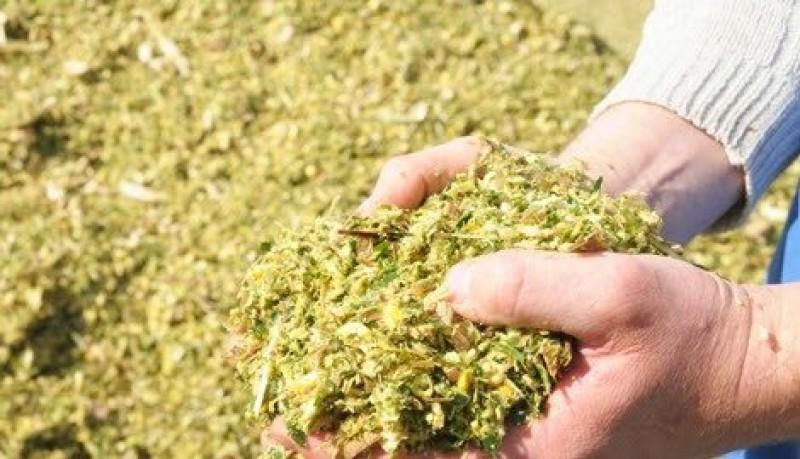 Инвесторы планируют построить завод по переработке сои и организовать производство силоса в ЕАО