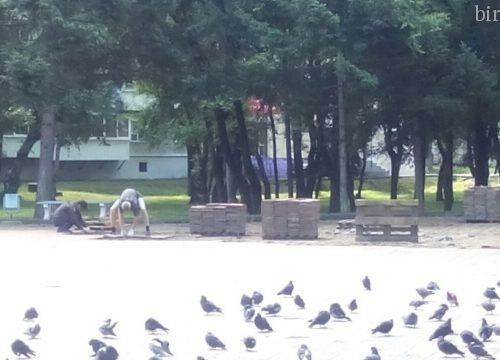 Вазоны украсят площадь Дружбы вместо скульптур животных