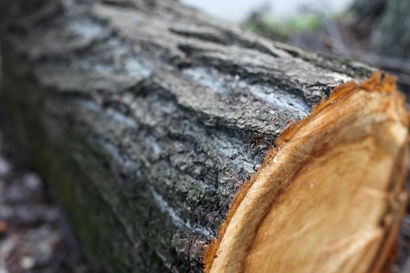 155 деревьев уничтожил получатель «дальневосточного гектара» в ЕАО