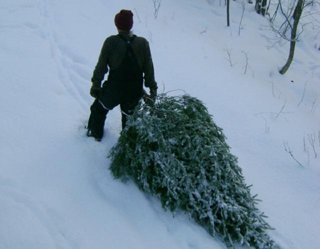 Жительница ЕАО обратилась в полицию с заявлением о пропаже елки