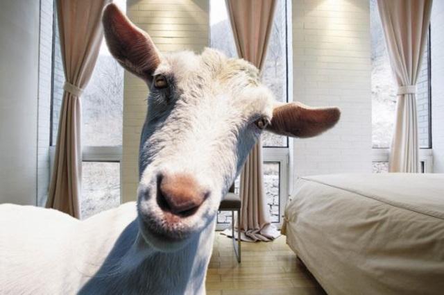 Мать растила двоих детей в одном помещении с козами, конями и собаками