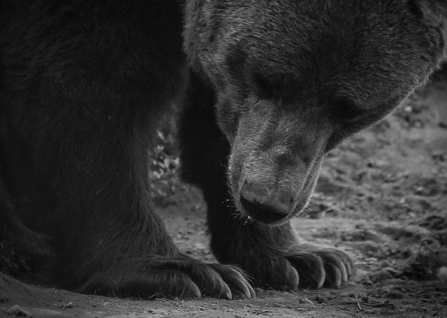 За чудовищную расправу над медведем вахтовики отделались штрафом