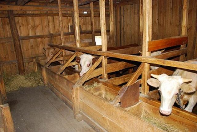 В ЕАО загорелся загон для скота: несколько животных пострадало