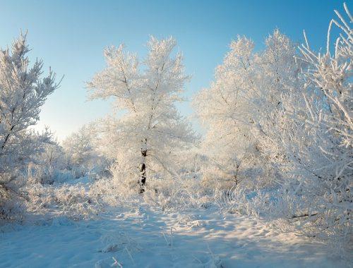 Малоснежным и морозным будет декабрь в ЕАО
