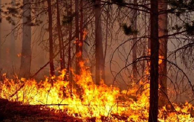 Область в огне: 56 природных пожаров зарегистрировано в ЕАО с начала пожароопасного периода