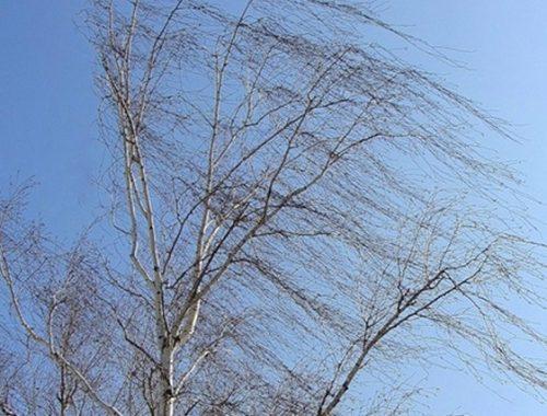 Сильный ветер порывами до 18 м/с ожидается 17 мая в ЕАО