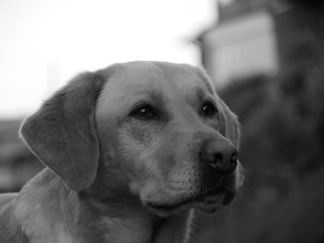 Около 30 убитых собак найдены на берегу озера в Хабаровском крае